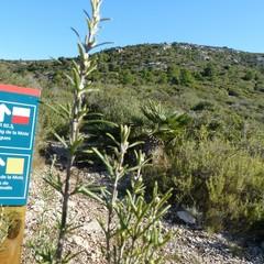 Puig de la Mola parco del Garraf