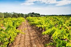 Festa della Vendemmia e Mostra del Vino
